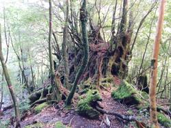 This forrest was the inspiration for the one in Mononokehime.